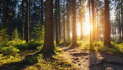 Wędrówka Ścieżka do lasu o zachodzie słońca