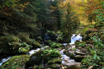 wildbach im schwarzwald