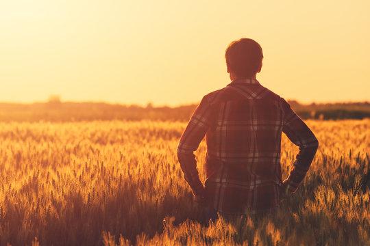 Farmer in ripe wheat field planning harvest activity