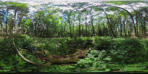 360 degrees spherical panorama of a beautiful european forest in the summer with blue sky