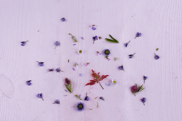 Flat lay composition of field flowers.