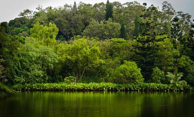 Jungle Reflections 1