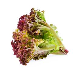 Red oak lettuce isolated on white background.
