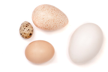 Goose turkey chicken and quail eggs isolated on white background
