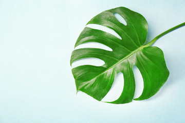 Green tropical leaf on light background