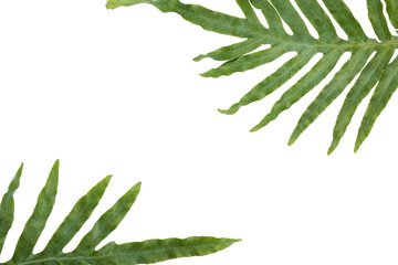 Composition with green tropical leaves on white background