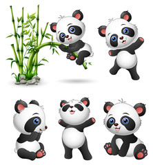 Cute baby pandas collection