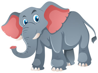 Gray elephant on white background