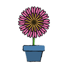 beautiful flower in a pot icon over white background colorful design vector illustration