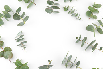 Baby eucalyptus leaves pattern on white background with copy space