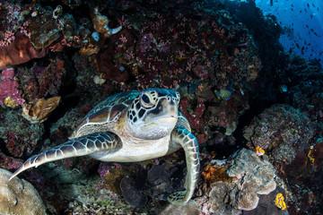 Turtle on a Ledge
