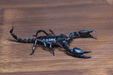 Scorpion on the house floor in Thailand and Southeast Asia.