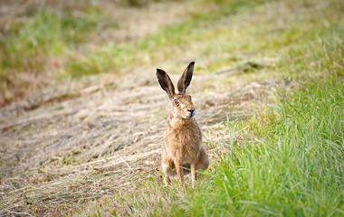 Cute rabbit on a field