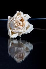 Old dead rose