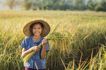Asian children farmer on yellow rice field.
