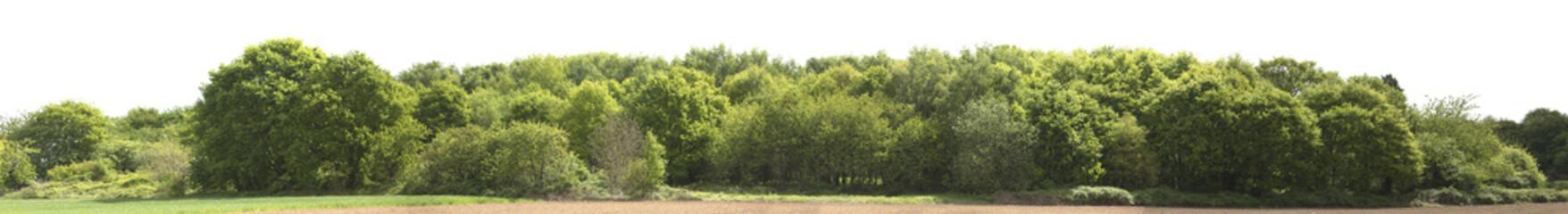 Türaufkleber Pistazie High definition Treeline isolated on a white background