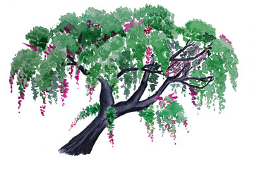 Watercolor hand drawn wistaria tree isolated on white background