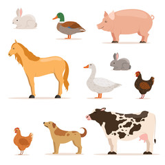 Different domestic animals on farm. Geese, ducks, hens chickens and cattle. Vector illustrations set