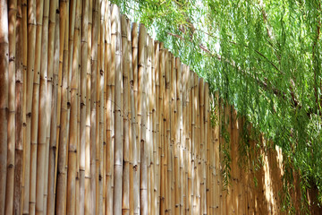 Bamboo fence with weeping willow tree