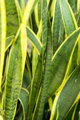 Pflanze Grün und Gelb