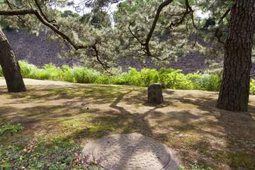Giardini palazzo imperiale, Tokyo, Giappone, Estremo Oriente