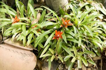 Pflanze im Garten