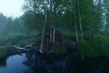 Time before dawn hut beaver in a light misty haze
