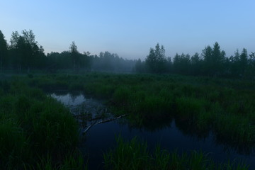 Green meadow in the summer mist before dawn