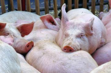 pensez à eux, devenez végétariens !