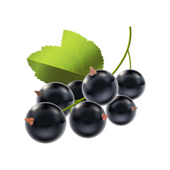 Realistic Detailed Ripe Black Berry Currant. Vector