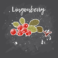 Lingonberry hand drawn painting grunge  on black background. Vector illustration of berries