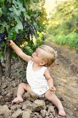 the little beautiful boy eats grapes near a vineyard