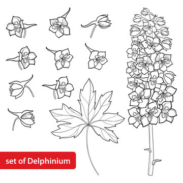 Vector set with Delphinium or Larkspur. Flower, bunch, bud and leaf in black isolated on white background. Floral elements in contour style with ornate Delphinium for summer design and coloring book.