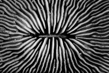 Coral Pattern and Texture in Nature