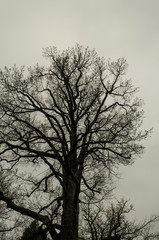 korony drzew niebo