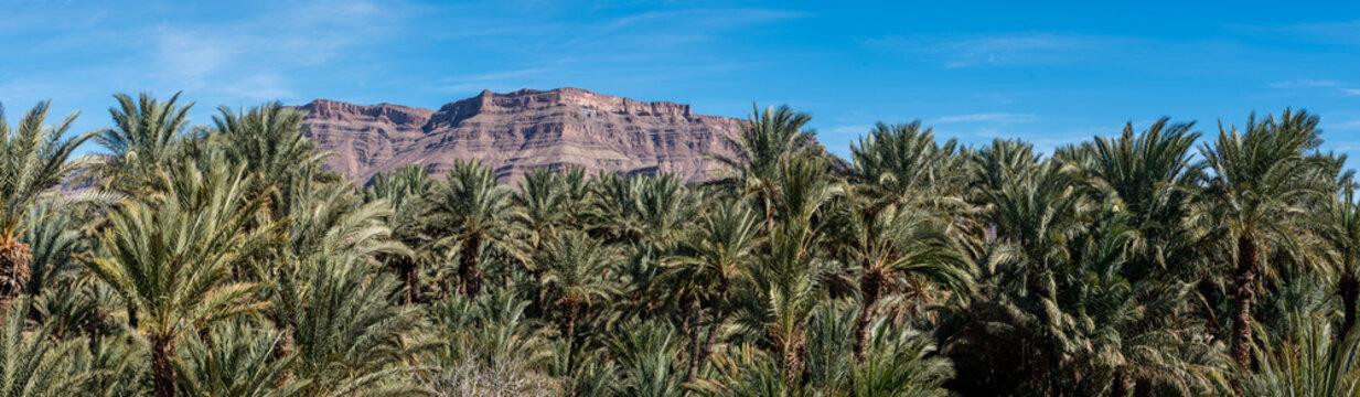 Palm tree panorama