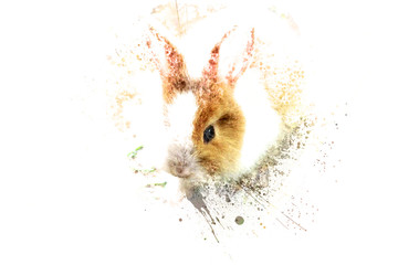 Beautiful rabbit on watercolor background