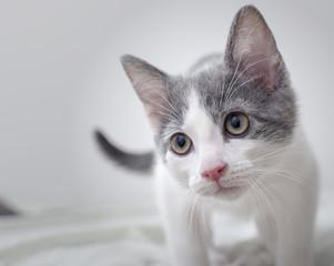 Kitten cat portrait