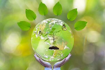 Green world and butterfly in man hand, green background, Earth image provided by Nasa.