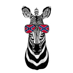 Zebra Horse wearing glasses with National flag of the Confederate States of America Usa flag glasses Wild animal for t-shirt, poster, badge, banner, emblem, logo