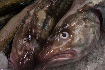 Fishmarket in Gothenburgh