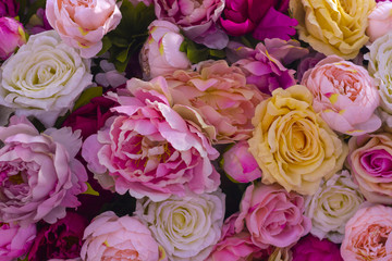 Colorful peonies flowers close-up