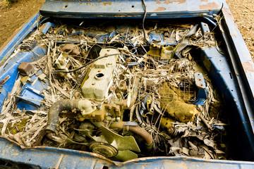 Altes, blaues, verrostetes Auto in der Wüste