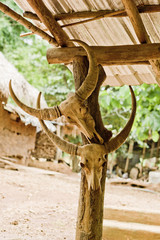 Büffelschädel Schädel und Hörner