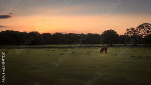 Horse in a Green Field Feeding At Sunset