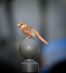 bird-on-a-mailbox