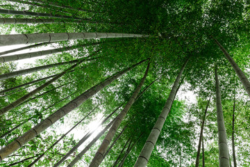 Green bamboo trees during the sunny day captured near Magome village in Japan rural area