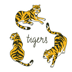 Vector set of tigers in the diffrent poses. Tropic animal collection isolated on the white background.