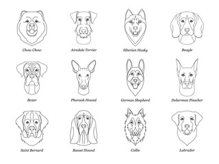 set, collection of isolated black outline head of airedale terrier, chow, husky, pharaoh hound, saint bernard, labrador, collie, doberman, boxer on white background. Line cartoon breed dog portrait.