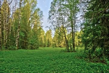 Лес пейзаж природа деревья фото